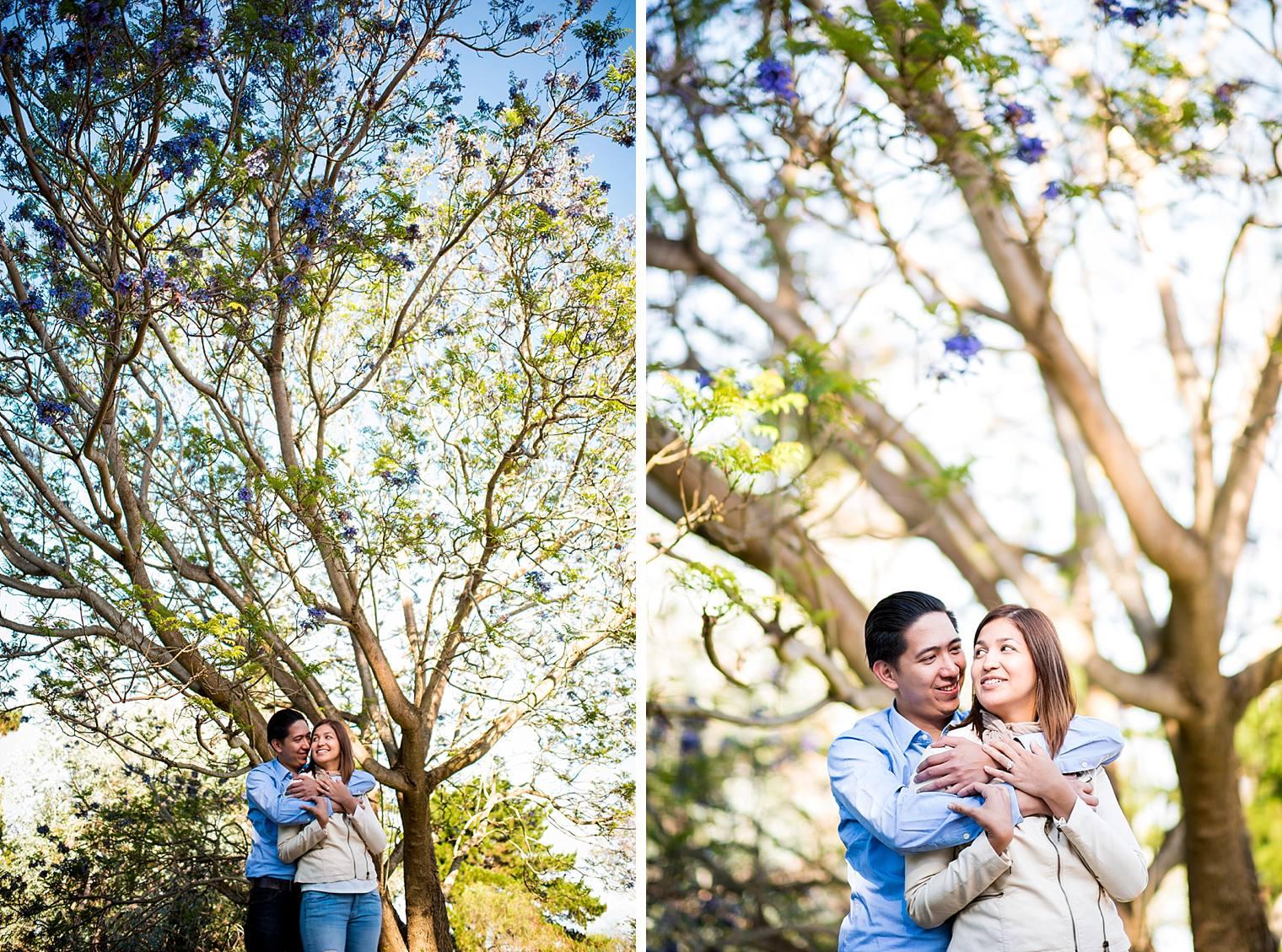 engaged couple under jacaranda tree in maui