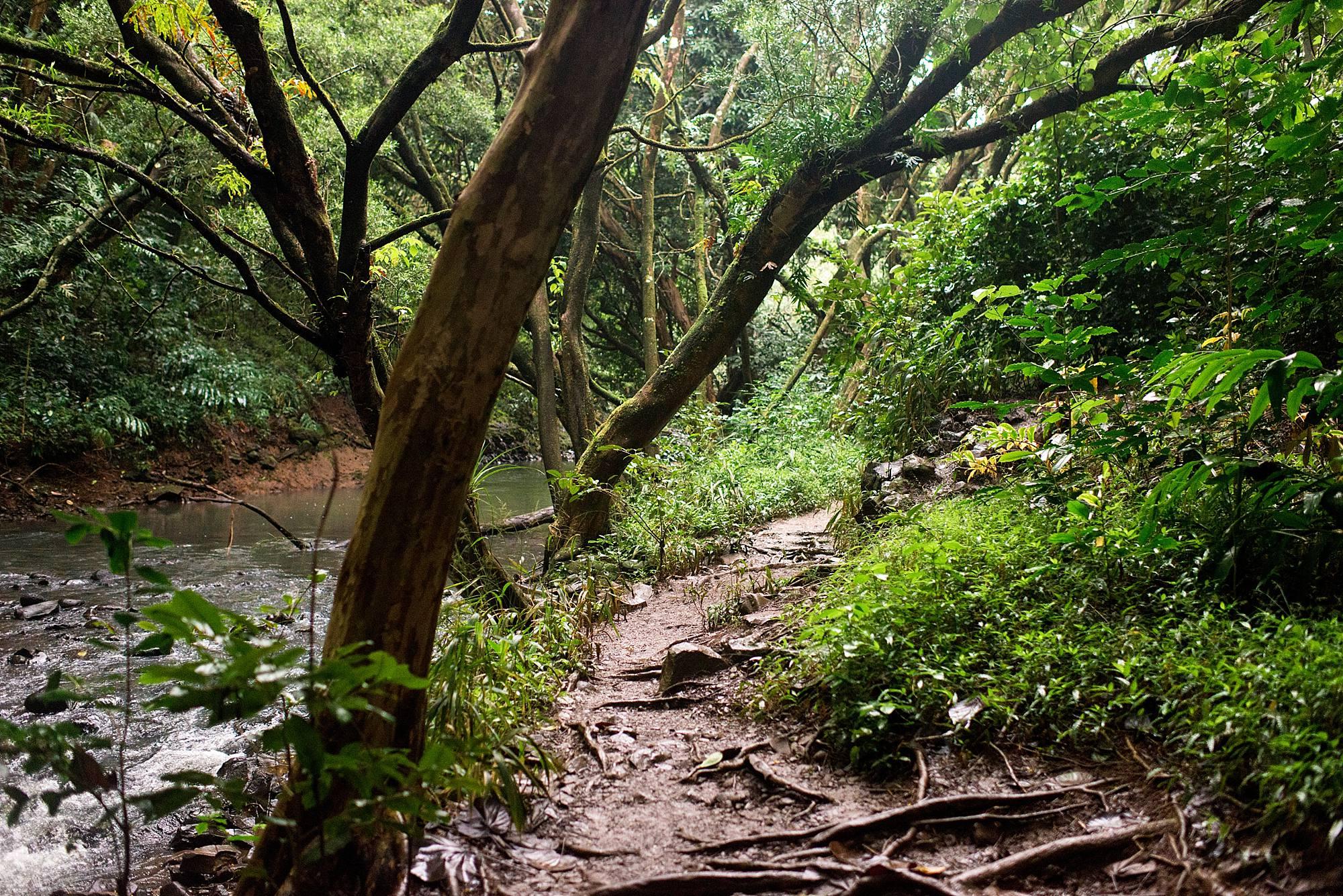 muddy jungle path