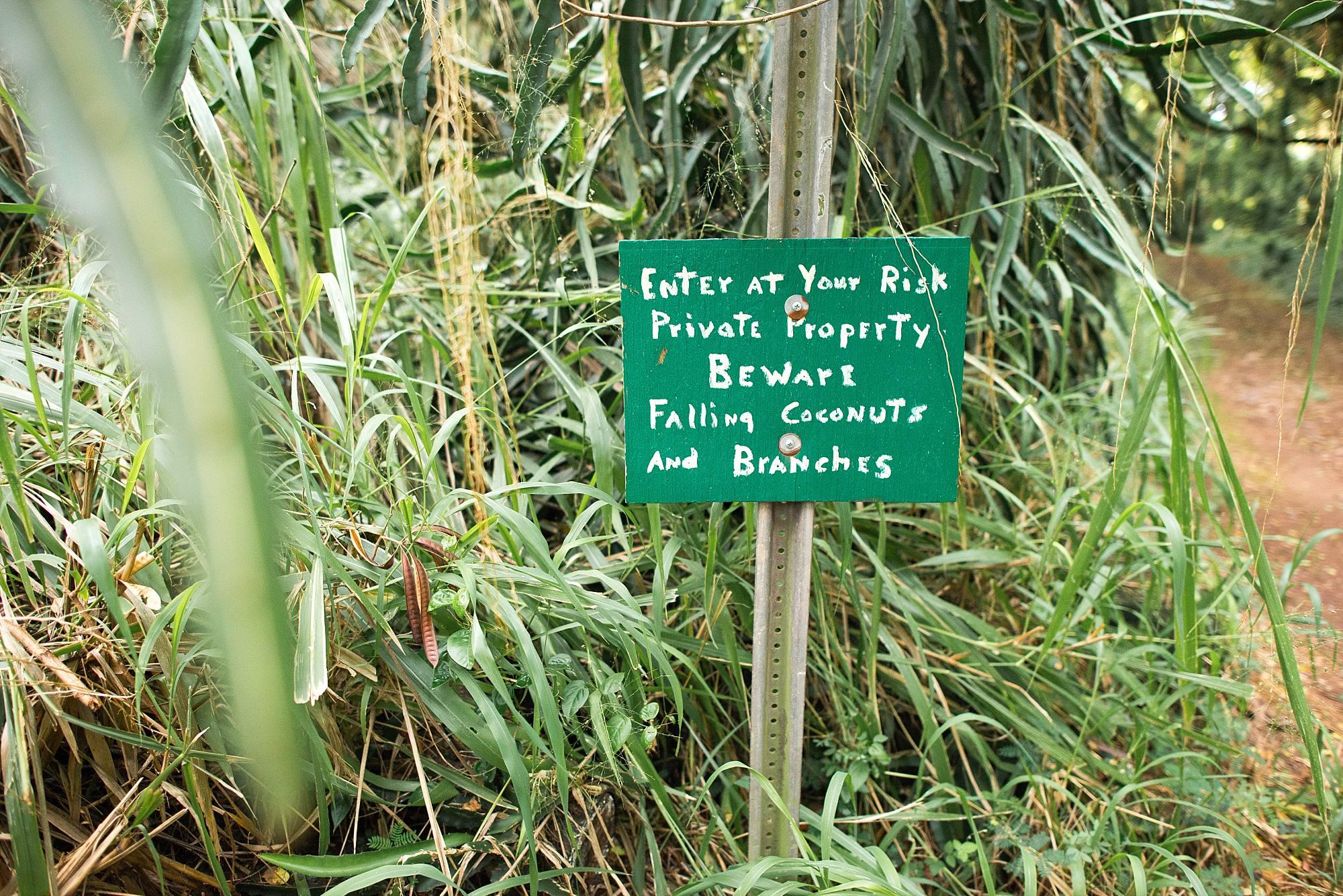 Jungle sign beware of falling coconuts