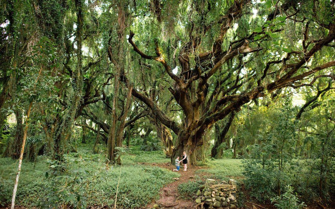 Jungle Proposal in Northwest Maui | Derrek + Michelle