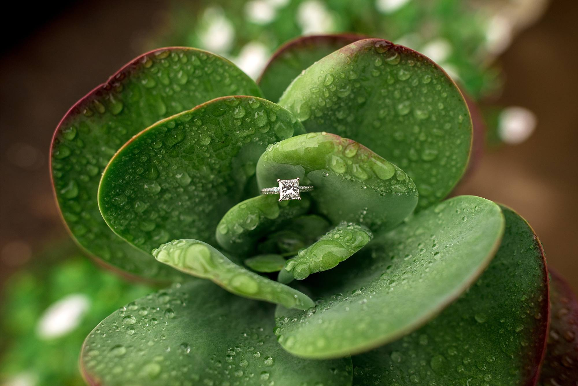 princess cut diamond engagmenet ring in dew covered greenery