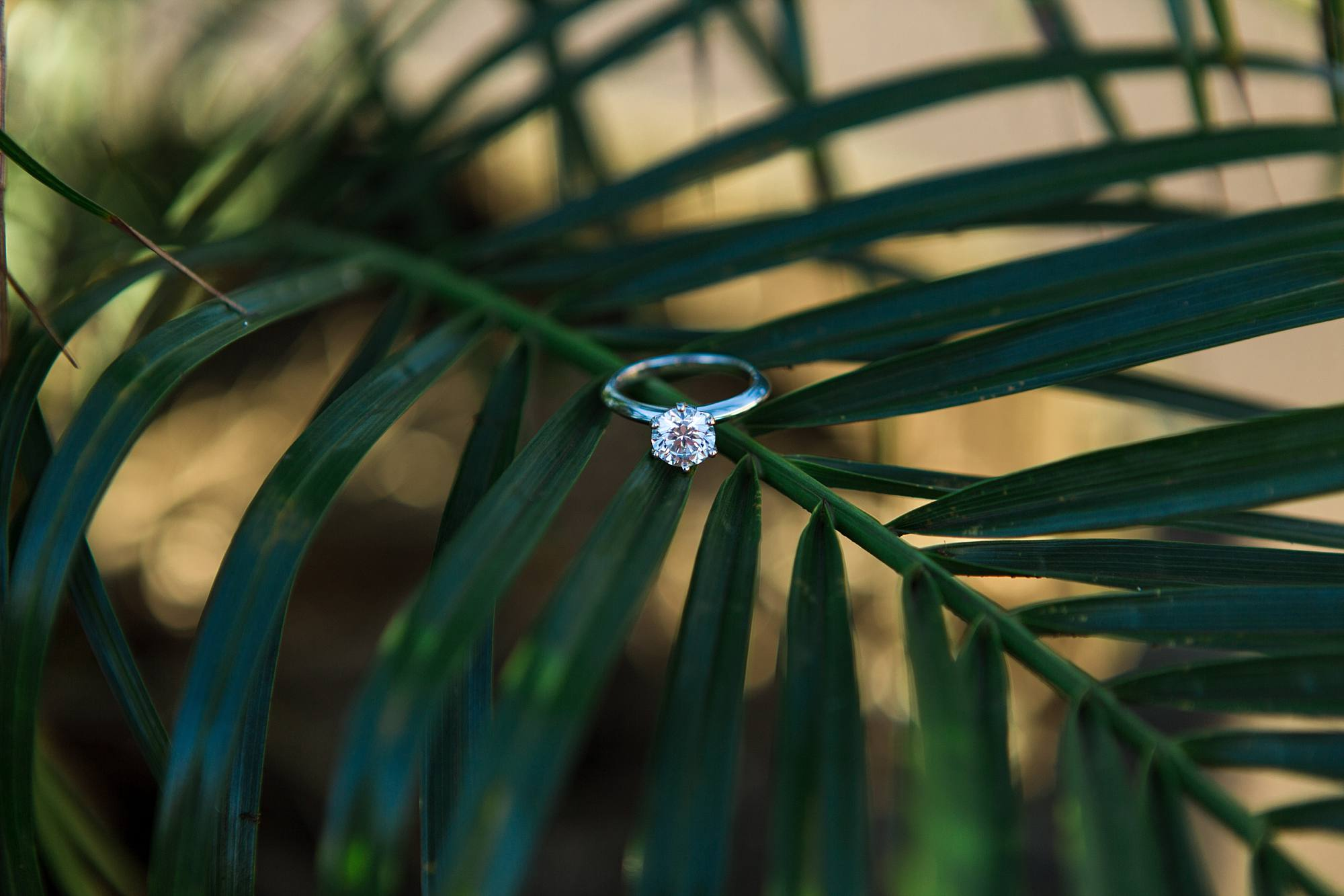 round solitaire engagement ring on greenery
