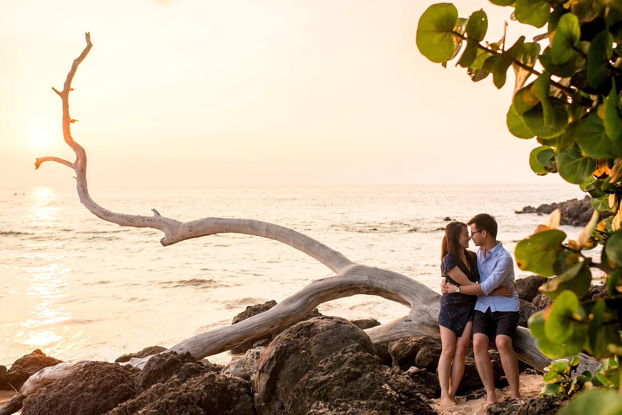 snuggling newly engaged couple on incredible driftwood tree in Maui