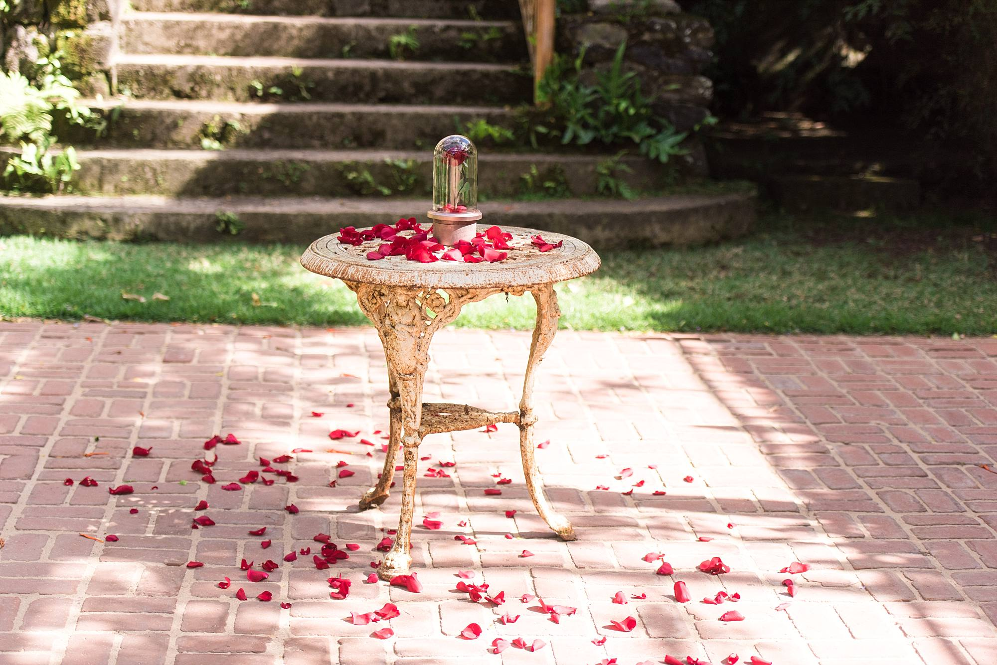 Beauty and the Beast rose sitting on a table with rose petals strewn around it