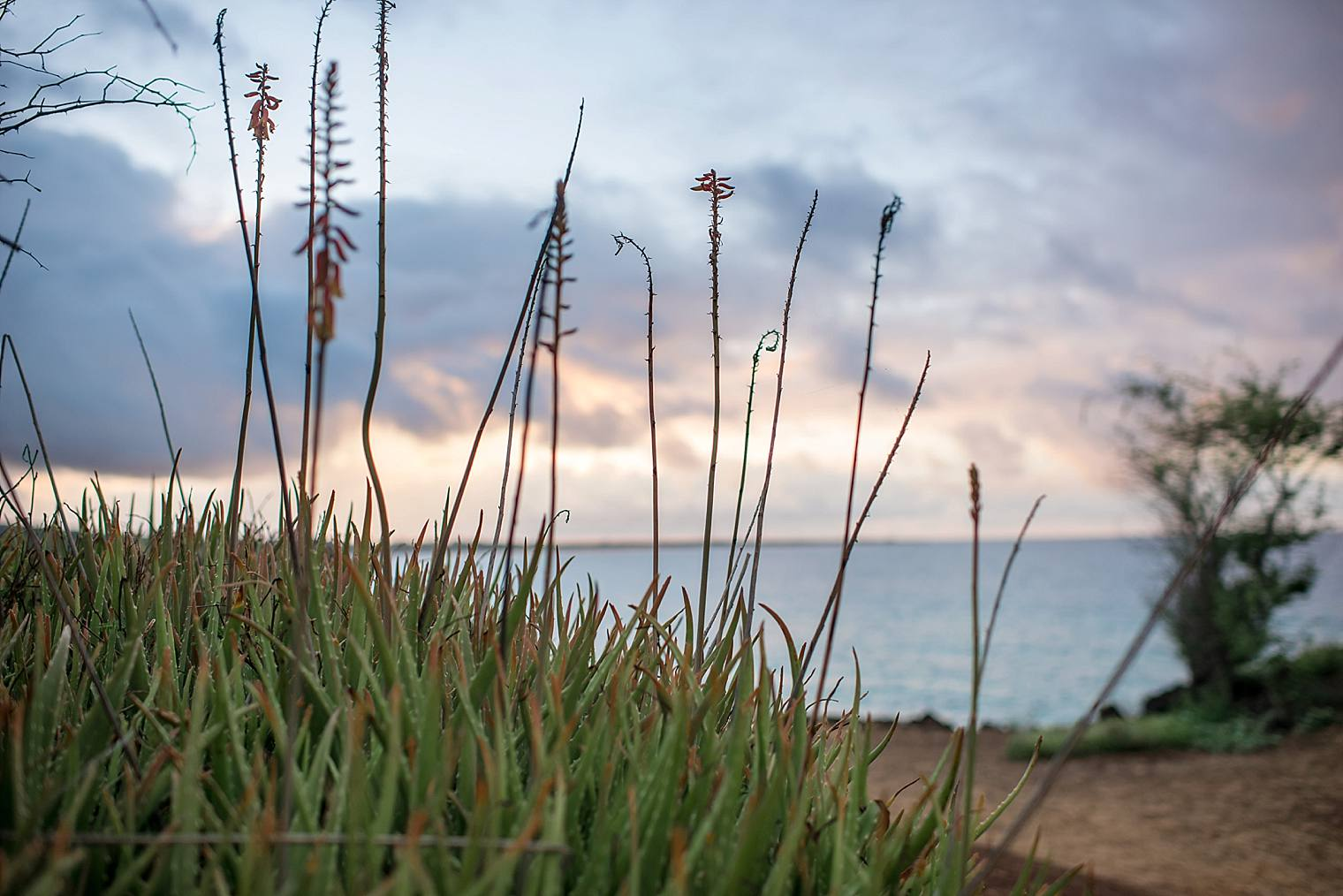 cliffside sunrise proposal in Maui_0003
