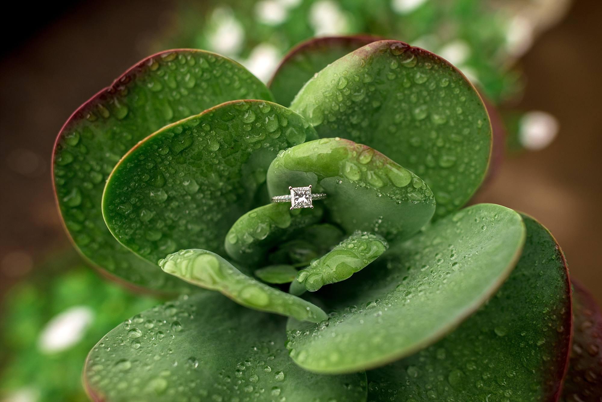 princess cut diamond engagmenet ring in dew covered greenery