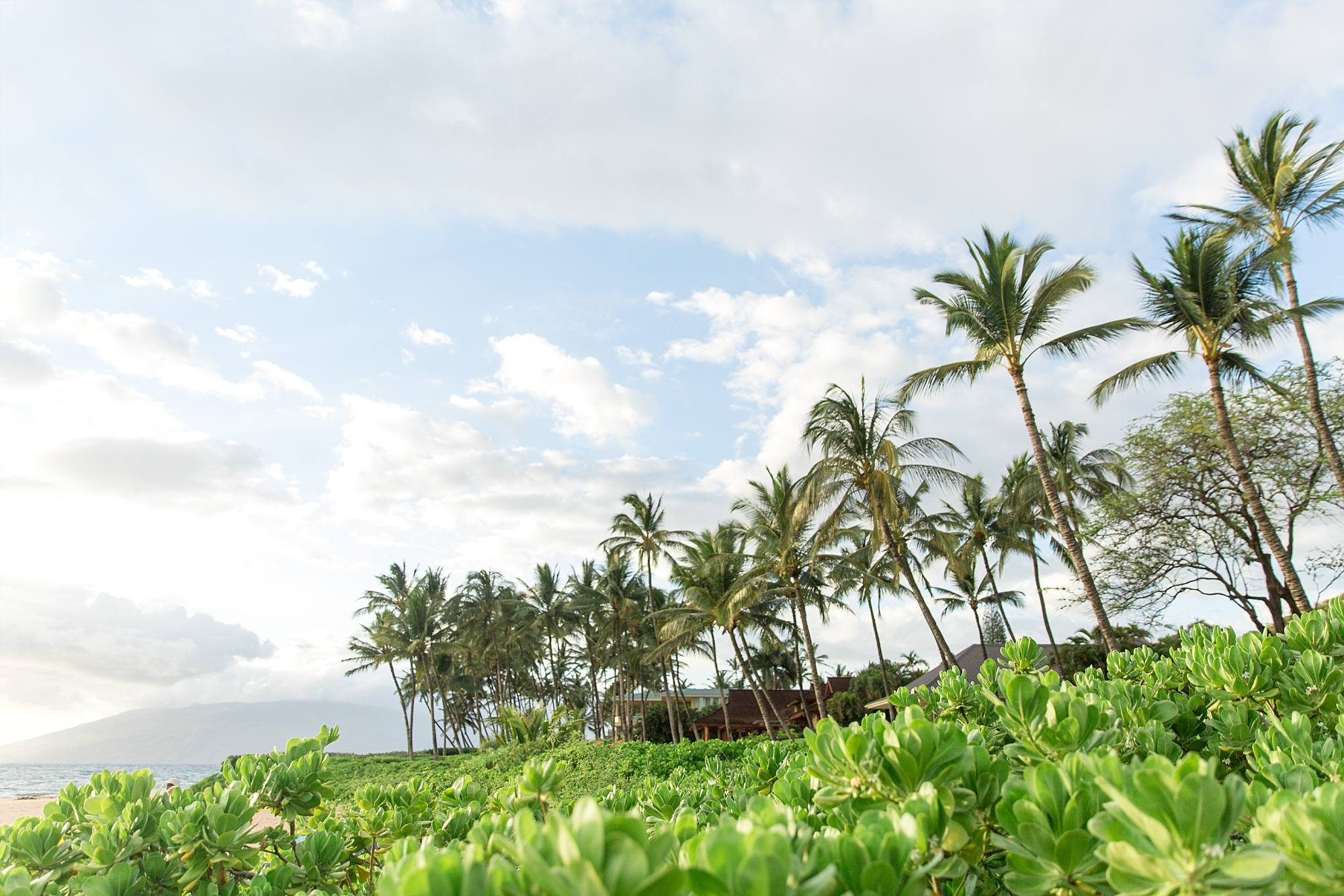 gorgeous Maui greenery and palm trees and blue skies with clouds