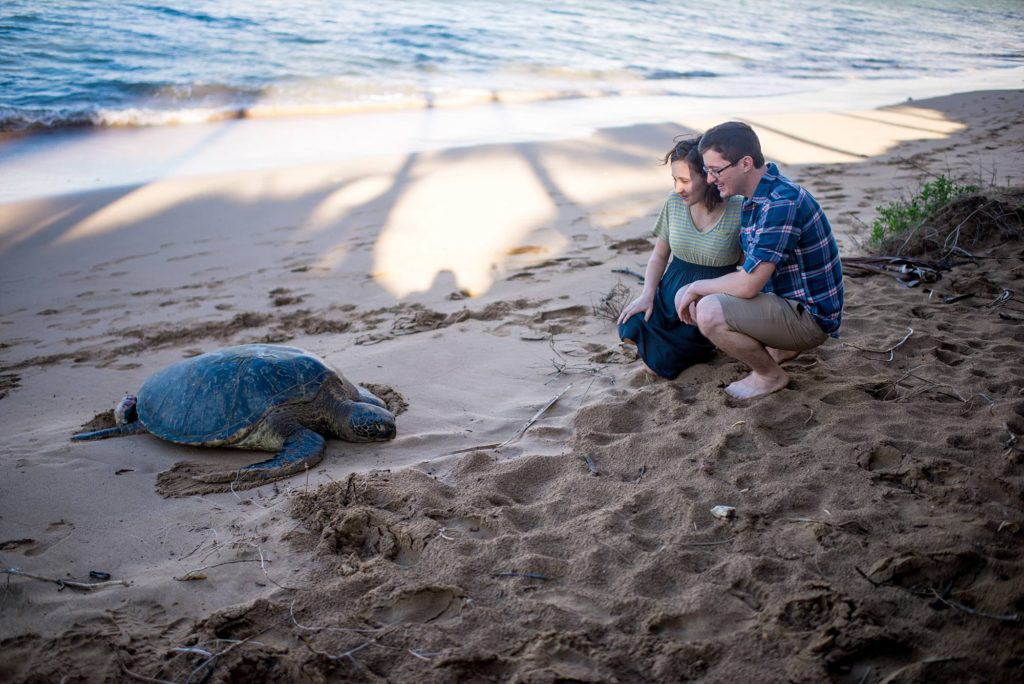 HONU sighting! A huge sea turtle came up to Photobomb us on our engagement shoot on Maui