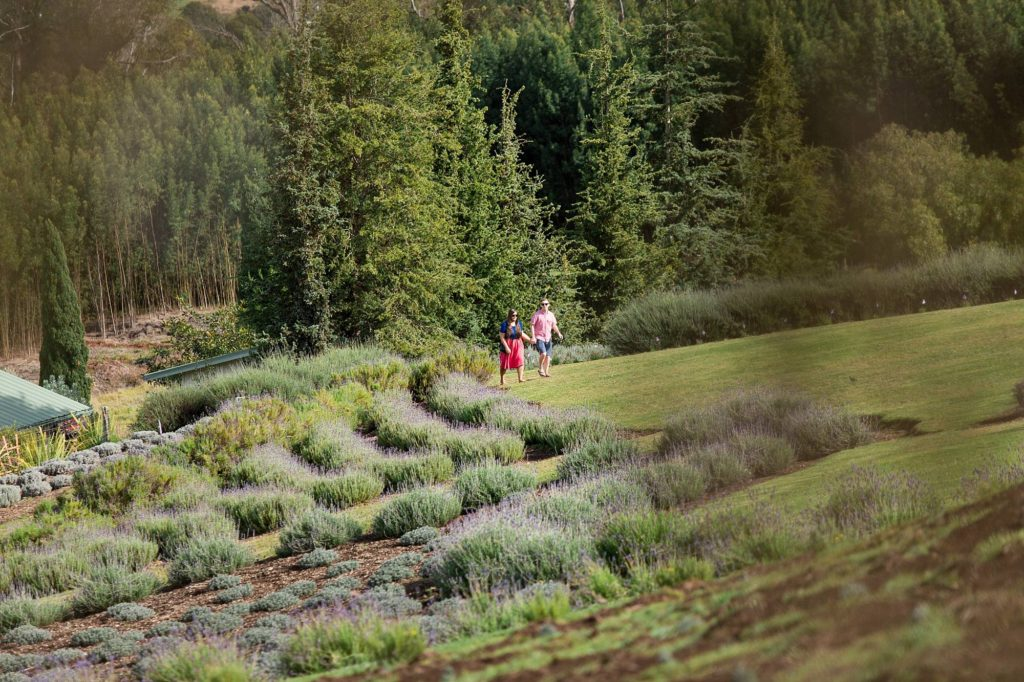 couple walking into Maui Lavender farm holding hand with huge Maui pines behind them