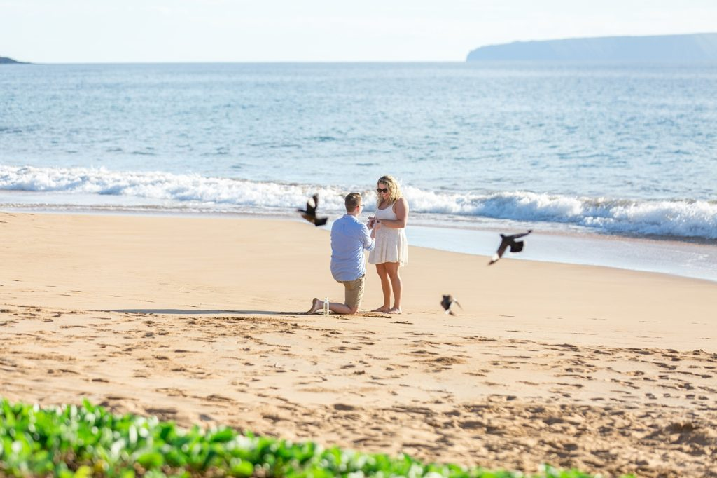 Maui beach proposal with birds