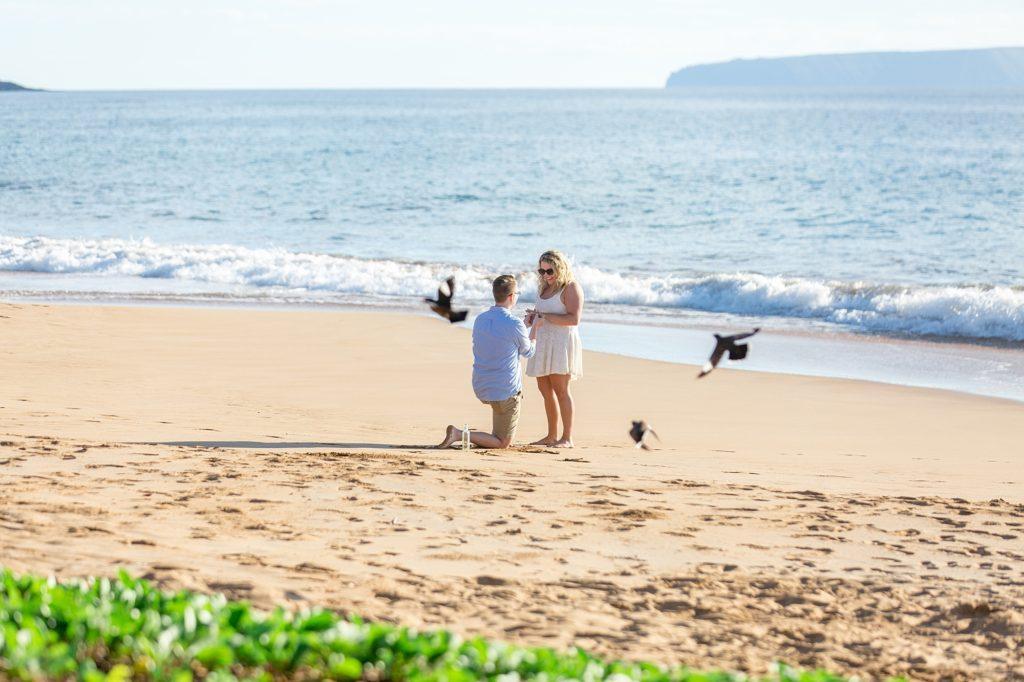 Maui beach proposal with birds
