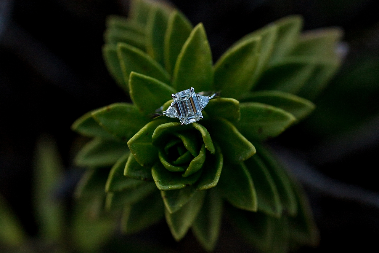 engagement ring on succulent