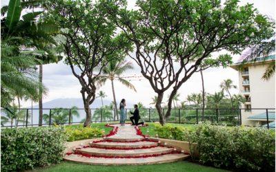 Elegant Proposal at Four Seasons Maui   Zia + Sarah